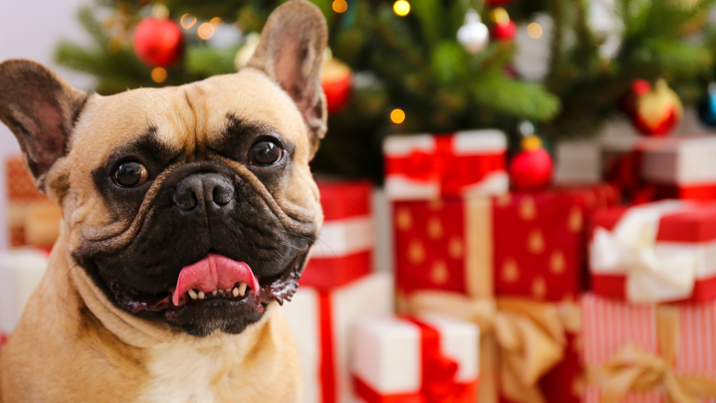 How to keep your dog safe during the holidays