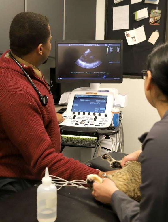 GVS Cardiology
