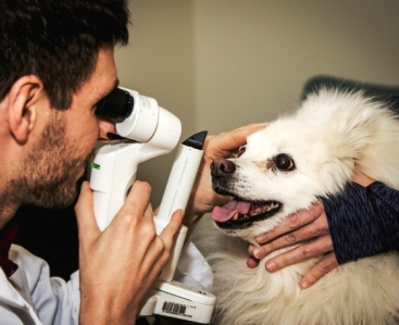 pet eye doctor usa