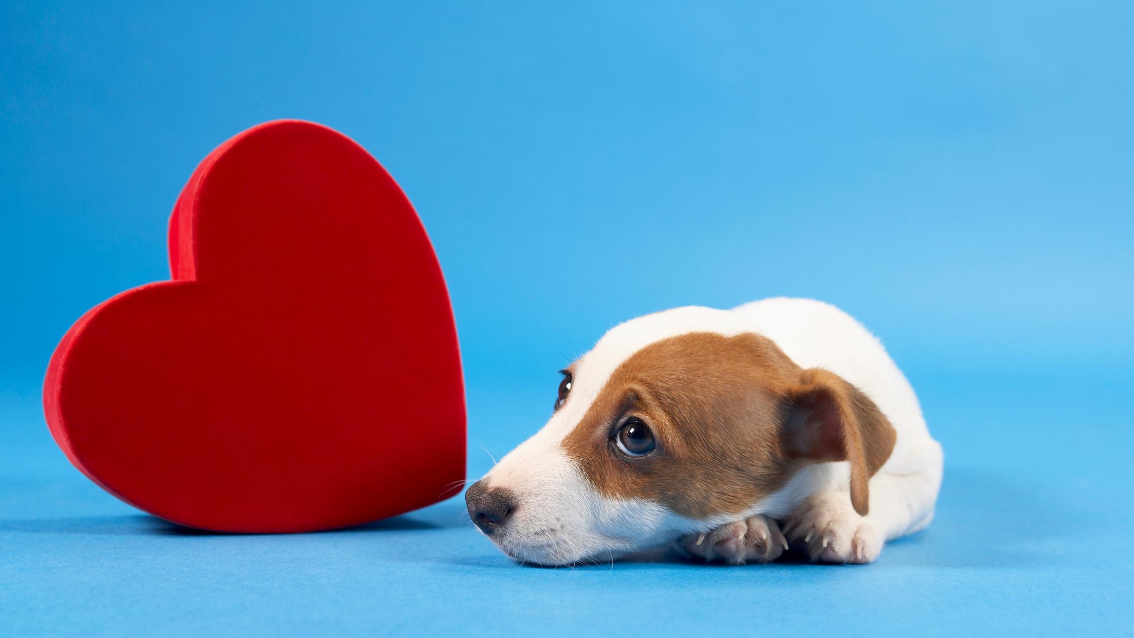 Pet Heart Health Month