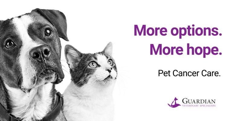 Pet cancer treatments at GVS